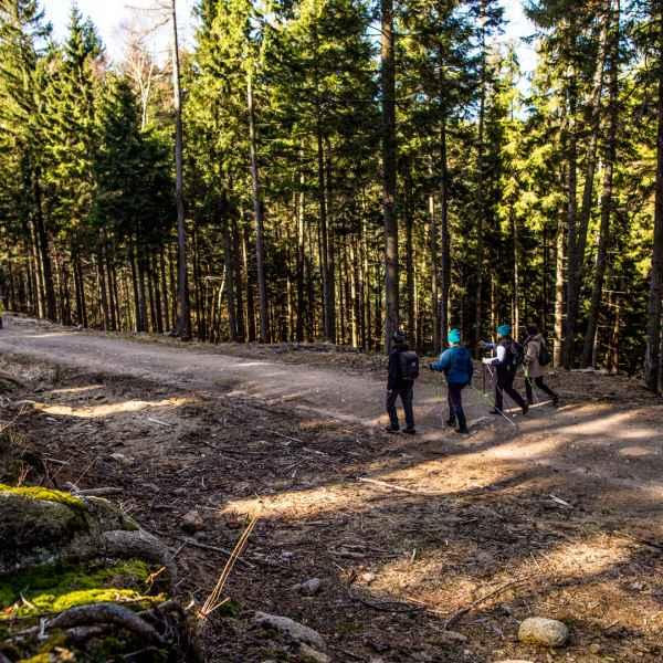 IMG_7063 All Walking Club | Urtica